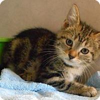 Adopt A Pet :: Emma - Oskaloosa, IA