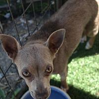 Adopt A Pet :: FAWN - San Pablo, CA