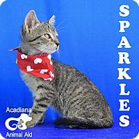 Adopt A Pet :: Sparkles - Carencro, LA
