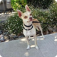 Adopt A Pet :: Paco - Lathrop, CA