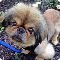 Adopt A Pet :: Redd - Fennville, MI