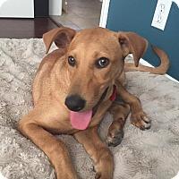 Adopt A Pet :: Talia - BONITA, CA