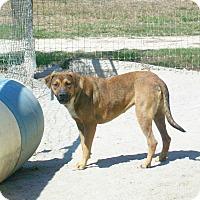 Shepherd (Unknown Type)/Spaniel (Unknown Type) Mix Dog for adoption in Mexia, Texas - Hermione