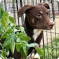Adopt A Pet :: Goosebumps - Cleveland, OH