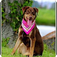 Doberman Pinscher Mix Dog for adoption in Madionsville, Kentucky - Daysha