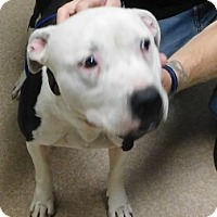 Adopt A Pet :: Otto - Saginaw, MI