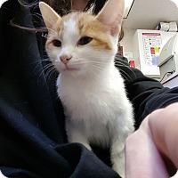 Adopt A Pet :: Vienna - Chicago, IL