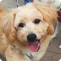 Adopt A Pet :: REXY - video to view - Marina Del Ray, CA