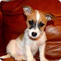 Adopt A Pet :: Miami - Staten Island, NY