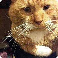 Adopt A Pet :: Oliver - Putnam, CT