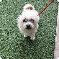 Adopt A Pet :: Tanner - Nashville, TN