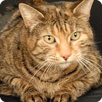 Adopt A Pet :: Magenta - Newland, NC