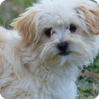 Anderson Sc Dog Adoption