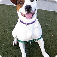 Adopt A Pet :: Dewey - San Francisco, CA