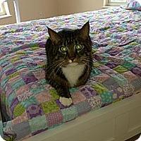 Adopt A Pet :: Howie - Bonita Springs, FL