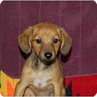 Adopt A Pet :: Layla - Chula Vista, CA