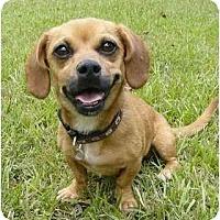 Adopt A Pet :: Darla - Mocksville, NC