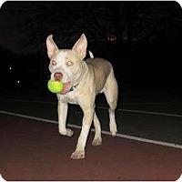 Adopt A Pet :: Peter - Dallas, PA