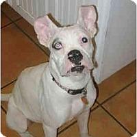 Adopt A Pet :: Opal - Brunswick, GA