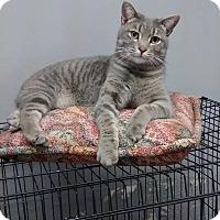 Adopt A Pet :: Clark - Fairbury, NE