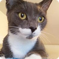 Adopt A Pet :: Josie - Trevose, PA