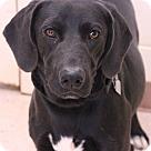 Adopt A Pet :: Brandon Stanton