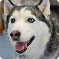 Adopt A Pet :: Nikita - Buffalo, WY