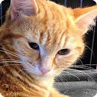 Adopt A Pet :: Moe - Shy boy! - Huntsville, ON
