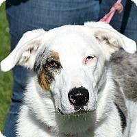 Adopt A Pet :: Axel - Huntley, IL