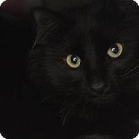 Adopt A Pet :: Smokey (Chuckie) - Bedford, NH