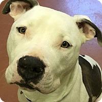 Adopt A Pet :: Cupid - Kansas City, MO