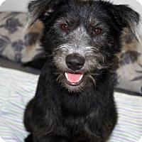 Adopt A Pet :: 'PII SAP' - Agoura Hills, CA