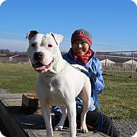 Adopt A Pet :: China-Prison Dog - Elyria, OH