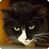 Adopt A Pet :: Lily - Parma, OH