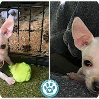 Adopt A Pet :: Wynn - Kimberton, PA