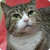 Adopt A Pet :: Clara - Wheaton, IL