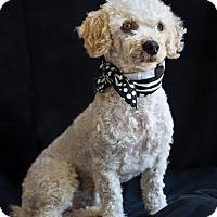 Adopt A Pet :: Nugget - Phelan, CA