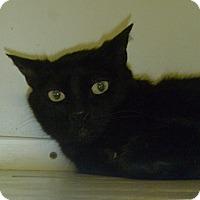 Adopt A Pet :: Tabitha Lynn - Hamburg, NY