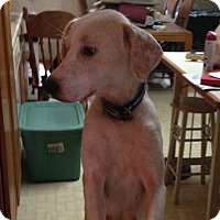 Adopt A Pet :: Vailey - Hainesville, IL