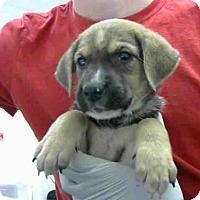 Adopt A Pet :: HOMER - Conroe, TX