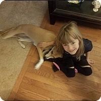 Saluki Mix Dog for adoption in Alexandria, Virginia - Maddie