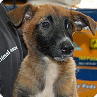 Adopt A Pet :: Sienna - Brooklyn, NY