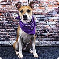 Adopt A Pet :: ROSIO - Sanford, FL