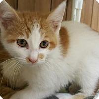 Adopt A Pet :: Kitten 14983 - Parlier, CA