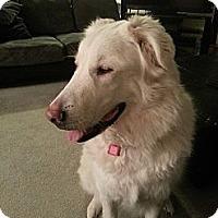 Adopt A Pet :: Mollie - Saskatoon, SK