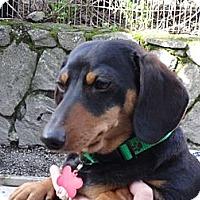 Adopt A Pet :: BREY & MAX - Portland, OR