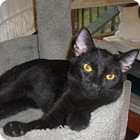 Adopt A Pet :: Blackie - Richmond, VA