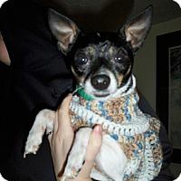 Adopt A Pet :: Goliath - Lorain, OH