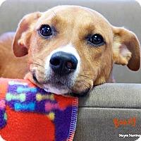 Adopt A Pet :: Bonny - Homewood, AL