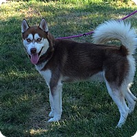 Adopt A Pet :: Blake - Zanesville, OH
